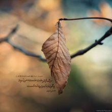 عکس نوشته پاییزی برگ از درخت خسته می شود وگرنه پاییز بهانه است